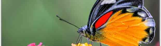 Tırtıl ve Kelebek