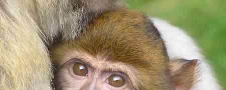 Maymun Kadar