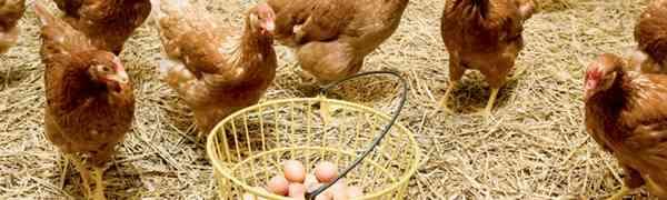 Yumurta Küfesi